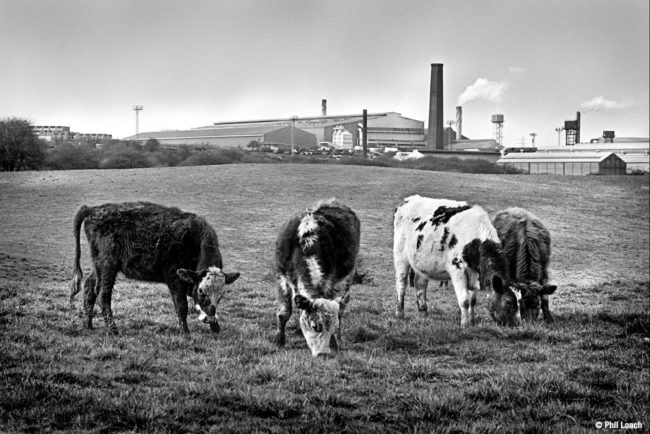 Cows and steelworks